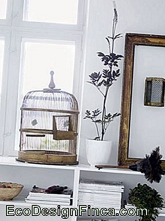 Decorative cage-22