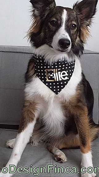 Dog Bandana - Cele 50 de cele mai gustoase si stilate idei!: care