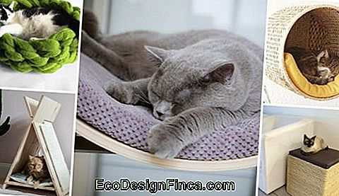 Cat Bed - 57 Super Cute Ideer Til Din Killing Sove!