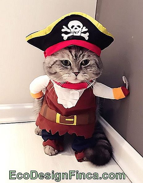 fantaisie pour chat pirate