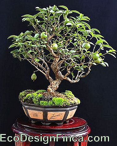 bonsai vaas decoratie