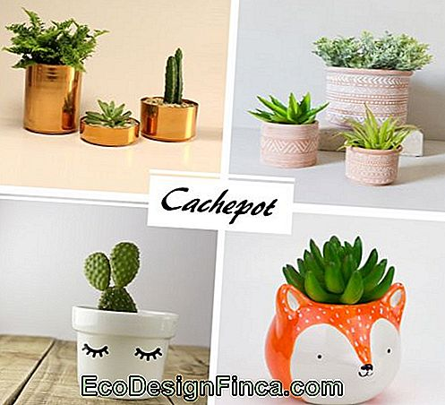 Cachepot: What Is It? - 65 Awesome Templates & Decorating Tips!
