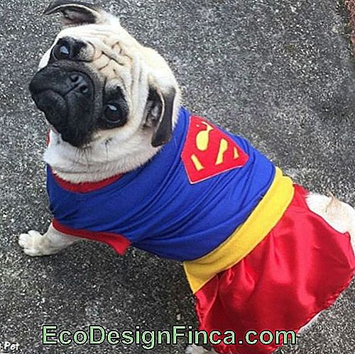 Vestiti da Superman