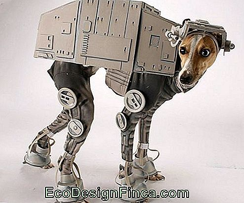 costumes-pour-chien-star-wars-1