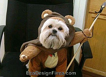 costumes-pour-chien-star-wars-2