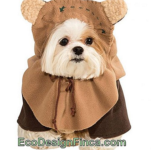 costumes-pour-chien-star-wars-3