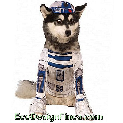 costumes-pour-chien-star-wars-4