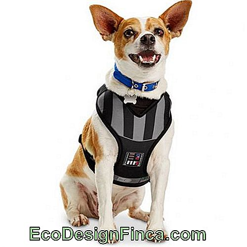costumes-pour-chien-star-wars-5