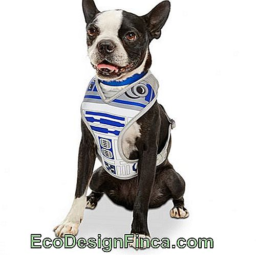 costumes-pour-chien-star-wars-6