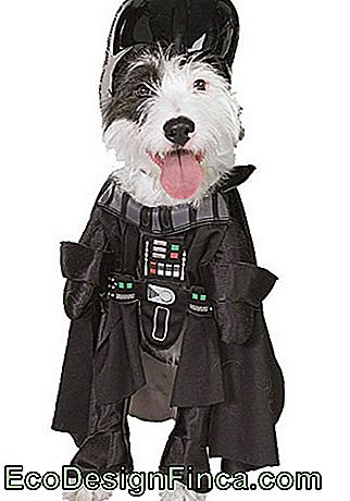costumes-pour-chien-star-wars-8