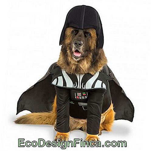costumes-pour-chien-star-wars-9
