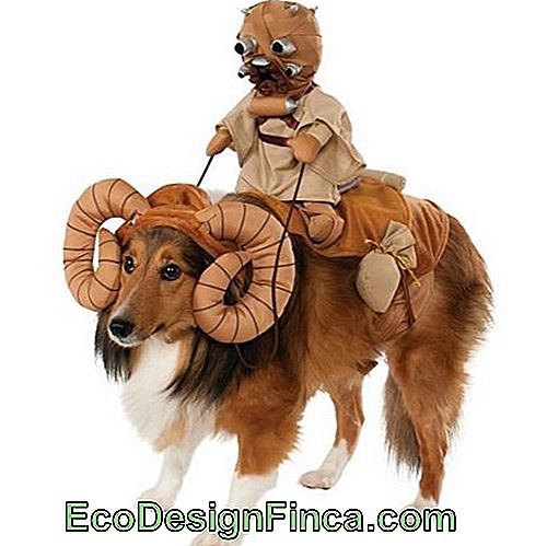 costumes-pour-chien-star-wars