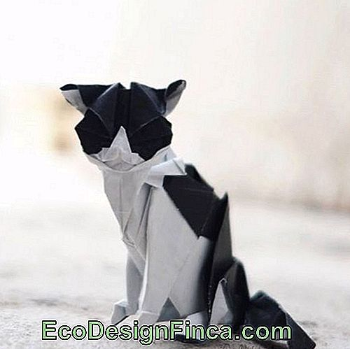Animal Folding: zwart en wit Cat