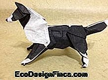 Animal Folding: Black and White Dog