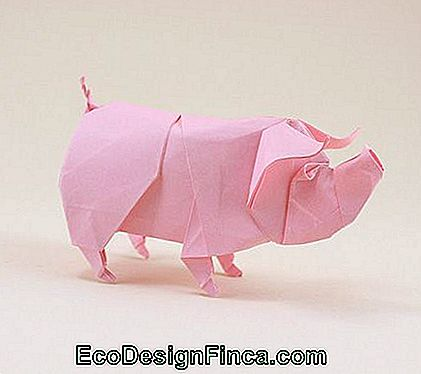 Animal pliant: cochon