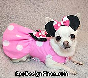 Minnie Hundekleid