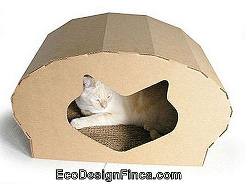 house-for-cats-recycled-1