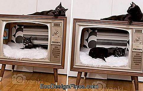 house-for-cats-recycled-3