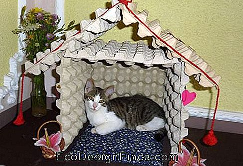 house-for-cats-gerecycleerde