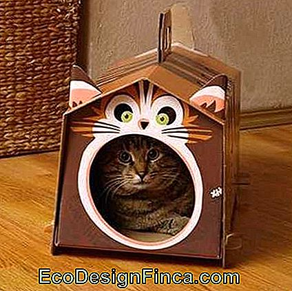 house-for-cats-recycled-7