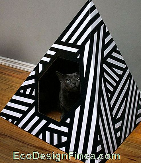house-for-cats-recycled-10