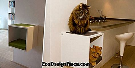 house-for-cats-MDF-2