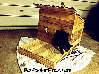 house-for-cats-wood