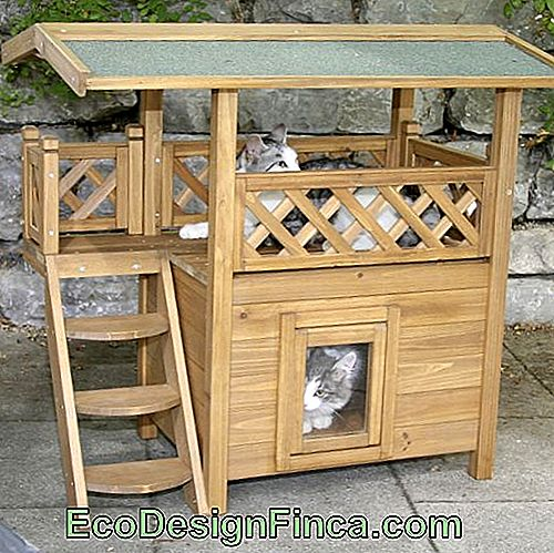 house-for-cats-wood-2