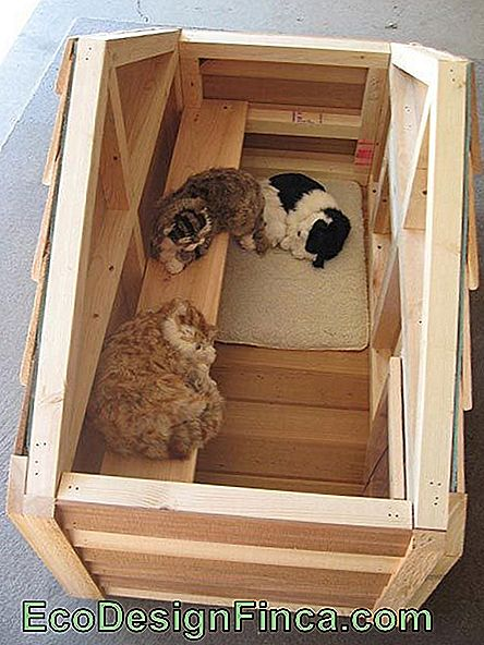 house-for-cats-MDF-3