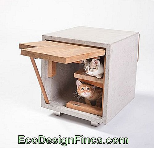 house-for-cats-modern-2
