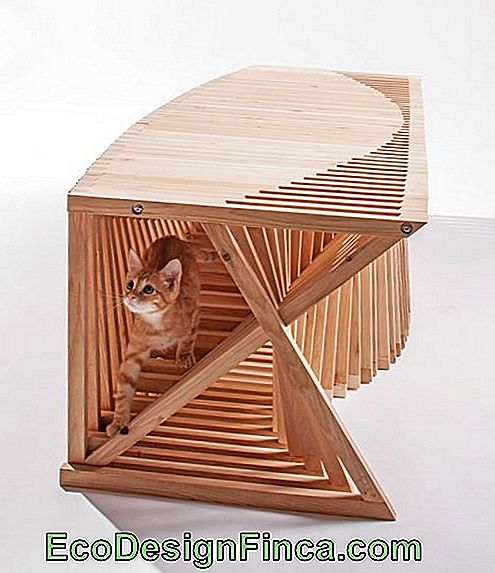 house-for-cats-modern-3