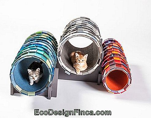 house-for-cats-modern-5
