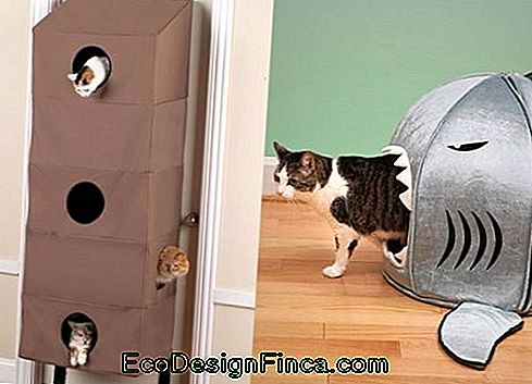 house-for-cats-modern-9