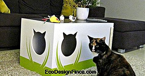 house-for-cats-MDF-5
