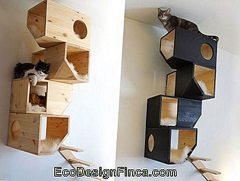 house-for-cats-MDF-7