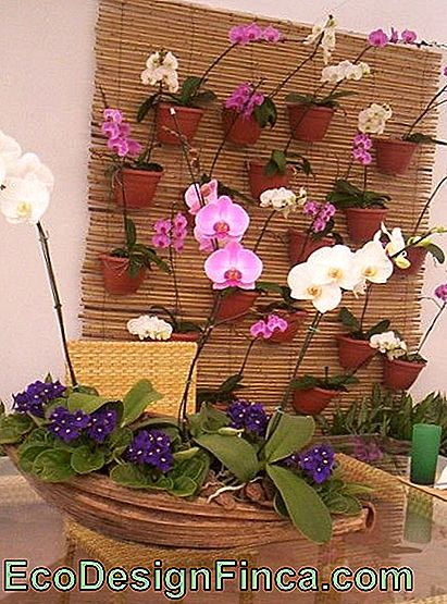 decorazione con orchidee