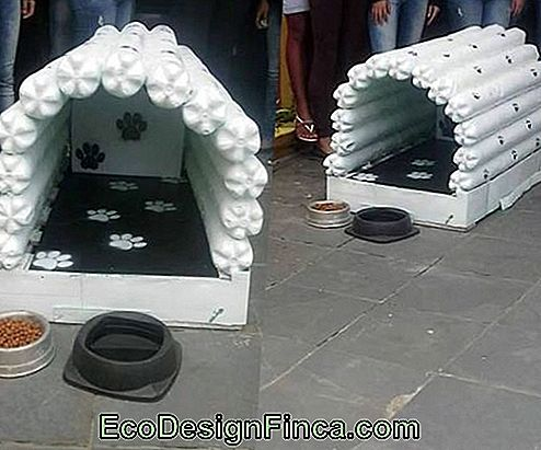 Big Doghouse Made of Pet Bottiglia