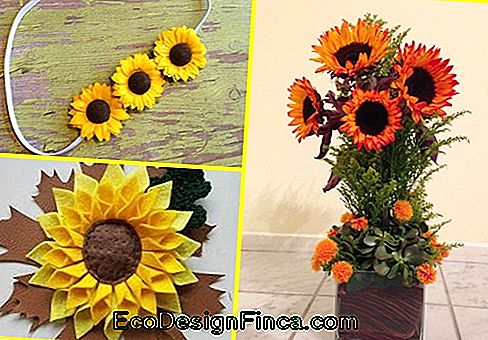 Inspirations de tournesol EVA