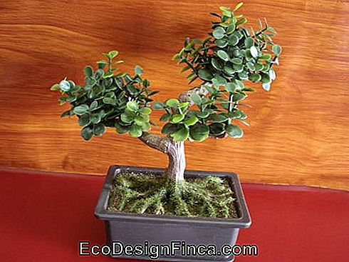 Specie albero artificiale-mini-bonsai