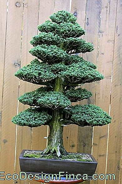 Albero artificiale-mini-nave-bonsai
