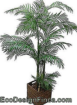 albero artificiale-mini-palma areca