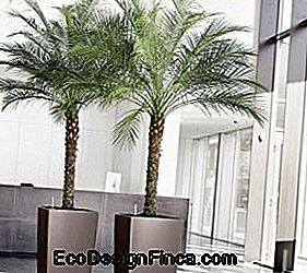 palms-to-garden-patalpose