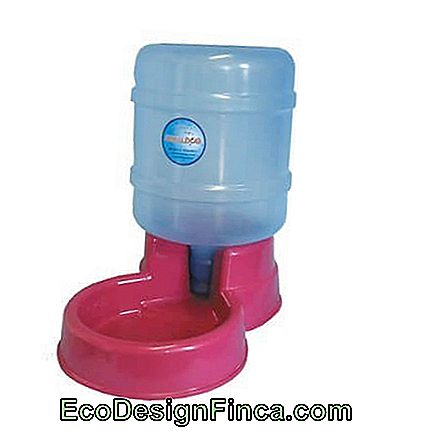 Hond waterkoeler tip met mini gallon water