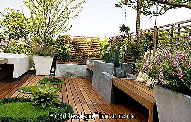 Wooden balcony with plants