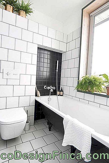 The green of the plants brings warmth and warmth to the bathroom in black and white