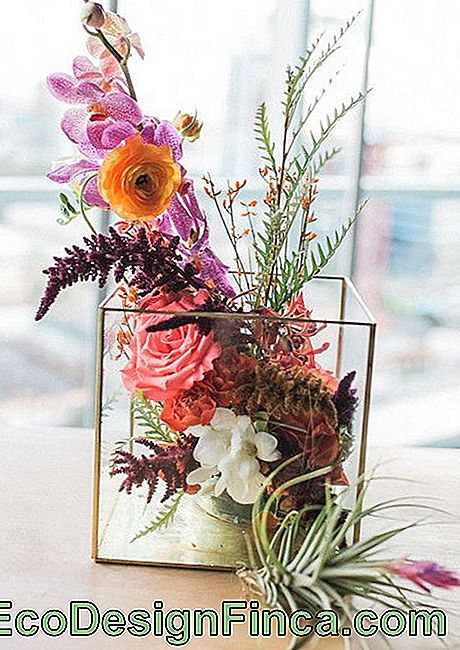 Rustic, colorful and very charming: make room for them