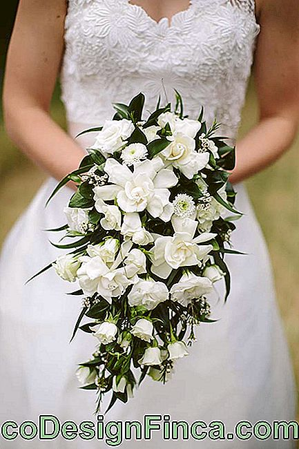 Flowers for wedding: bridal bouquet made with the whitish gardenias