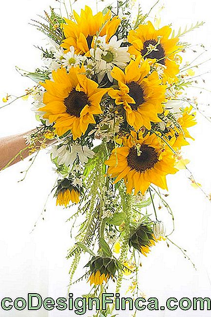 Cheerful and colorful bridal bouquet of sunflowers and daisies