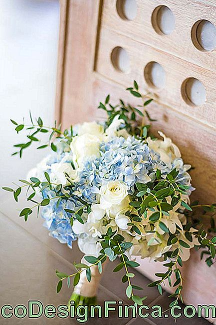 Blue hydrangeas and white roses form this bridal bouquet
