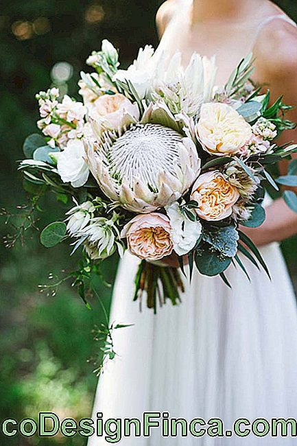 The bride's bouquet can also come into the proposal and be made with lisianthus